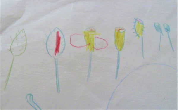 ナガミヒナゲシの一生を描いた絵