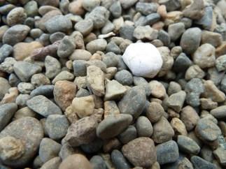 fureaibashi-step-stone