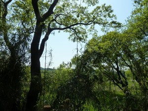 ibaraki-nature