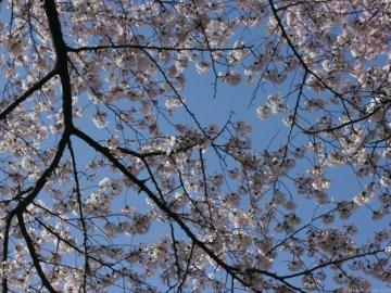 nakae-yuki-hanami-P1280897-020