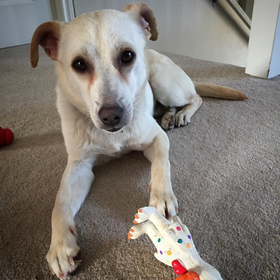 Casper with squeak toy