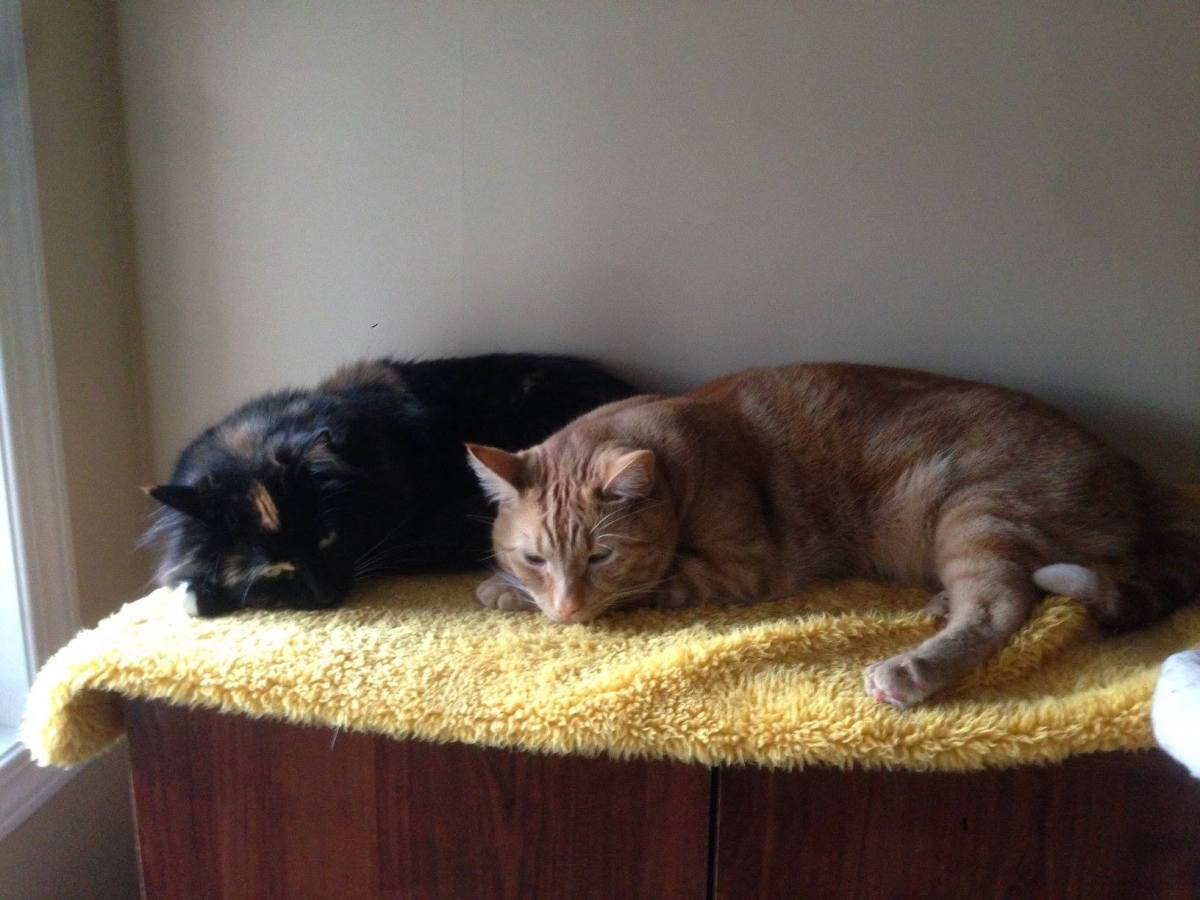 Best friends/siblings Cassio and Chico need a home while their owner is out of territory for medical treatment.
