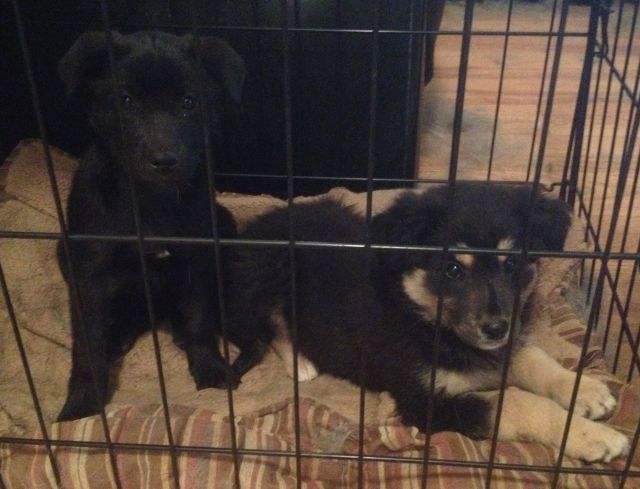Blackie and Fluffy are mix breed pups.