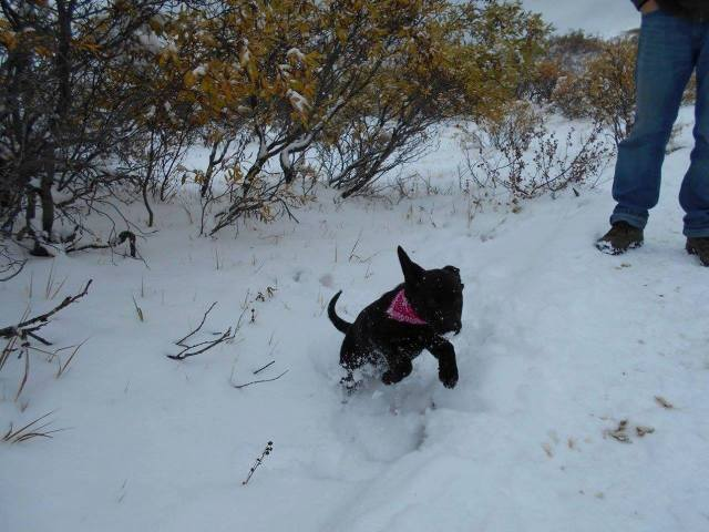 Bugaboo, AKA Nibbs from YARN's Candy Litter, frolics in her first snow at Tombstone Mountains.