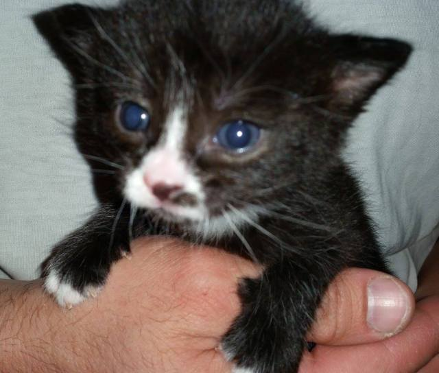 Rosetta is two-week-old female kitten looking for a home for Dec 1.