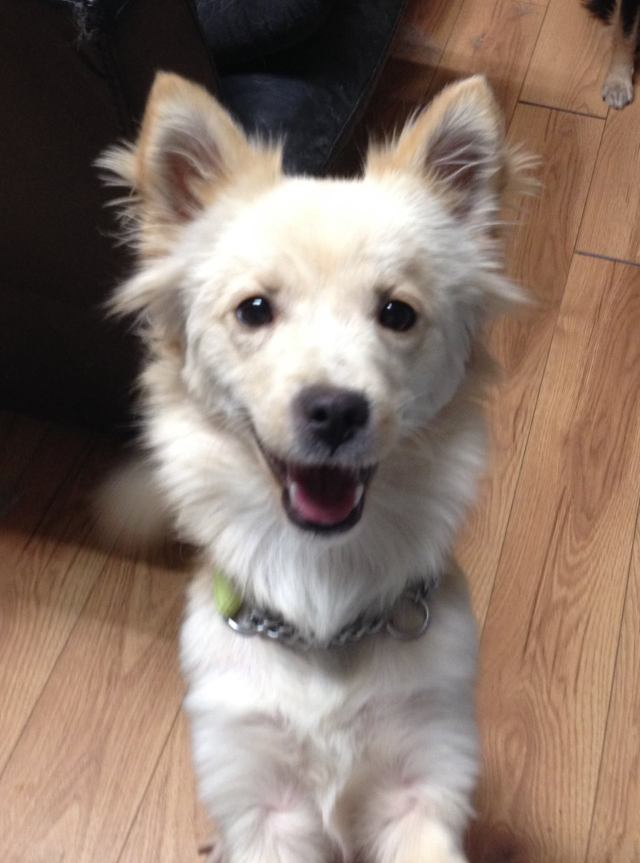 Cotton is a small-breed girl just over a year old.