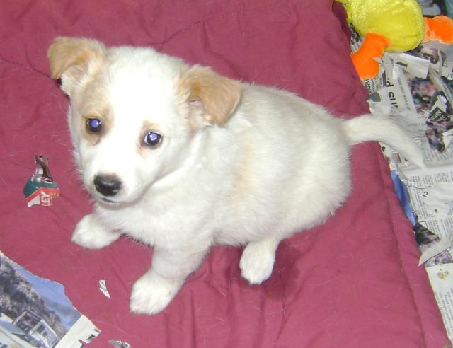 Circle is a female, small-breed pup.