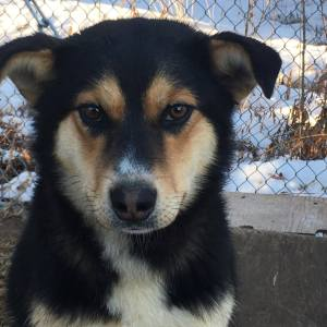 Naa Inn Shah is a young female mixed breed.