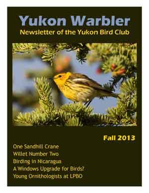 Yukon Warbler Spring 2013