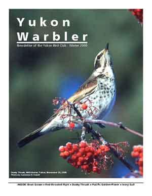 Yukon Warbler Winter 2000