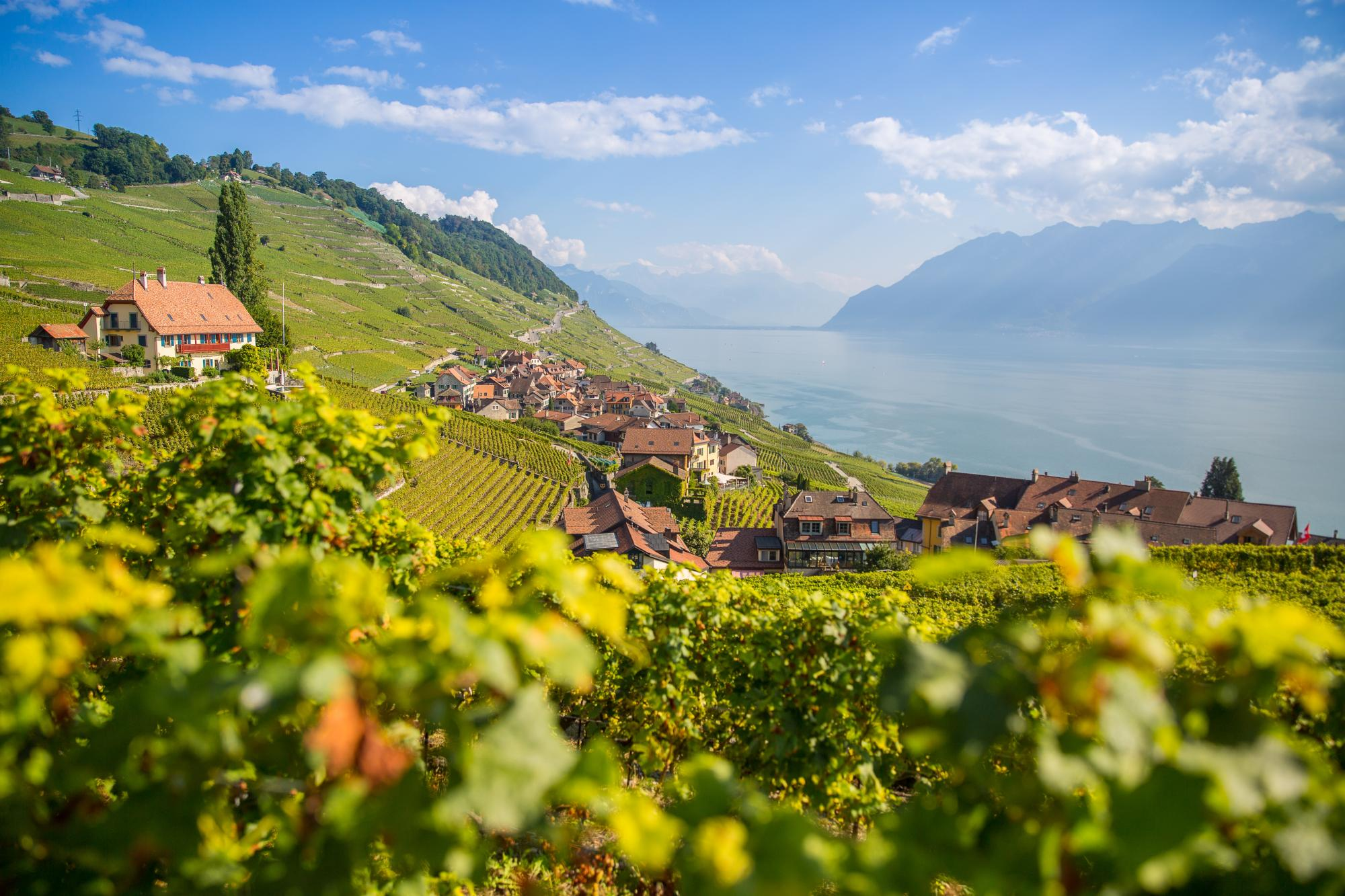 Wine tasting hike in Lavaux with a local guide