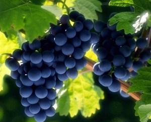 9 izdelkov za ubijanje raka | 9 izdelkov, ki ubijajo raka | grozdje | resveratrol