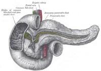 duodenum | двенадцатиперстная кишка | раздельное питание