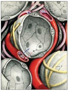 жиры | биохимия