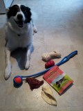 Got him a new Kong, Chuckit, rawhide bones, and some salmon treats. Check out that smile!