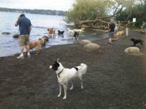 Magnuson Park Off-Leash area, complete with Dog Beach!