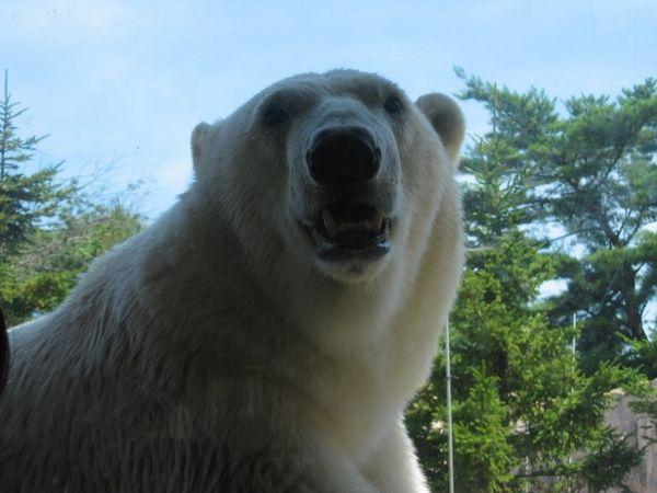 白熊に殺される
