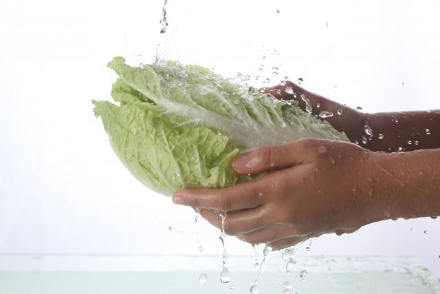 白菜を洗う