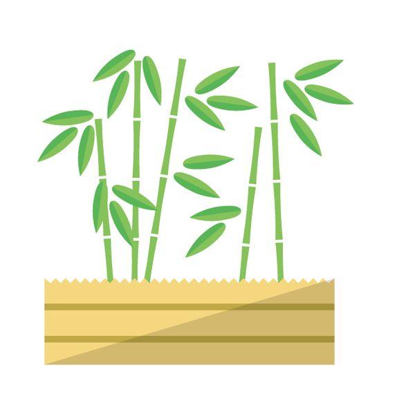 伸びない低い竹