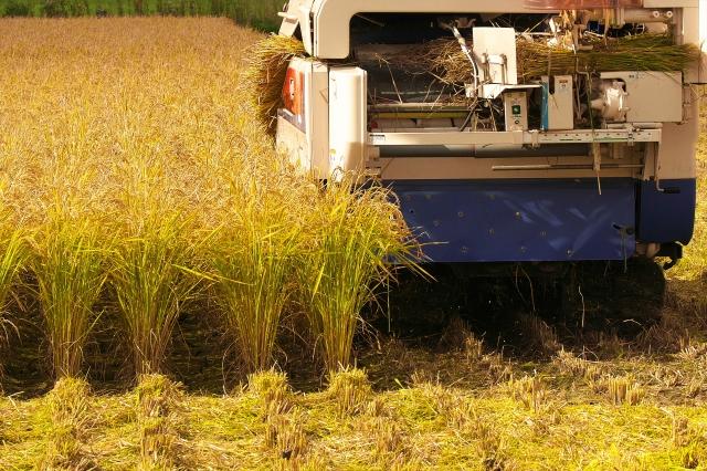 田んぼを収穫する
