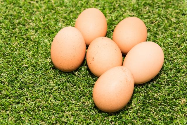 ひよこの卵を見ている