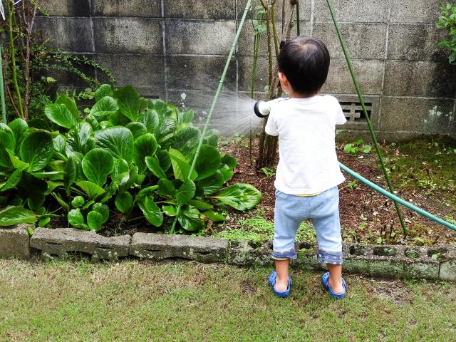 ホースで庭の花や木に水を撒く