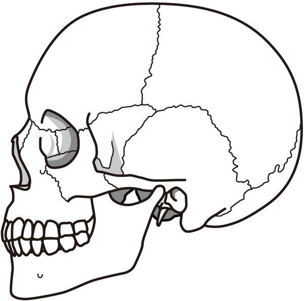 骸骨を発見する