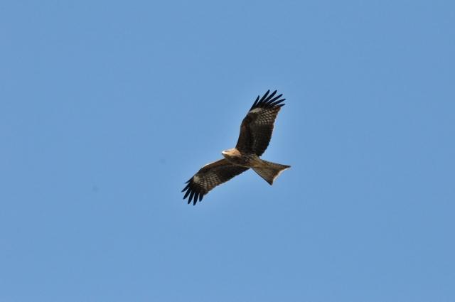 鳥が高く飛んでいる