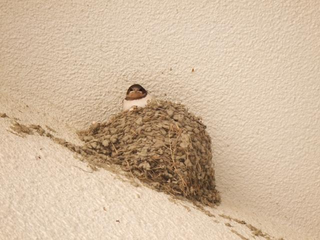 鳥が巣を作る