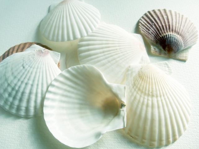 貝殻を拾う