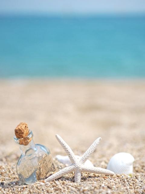 砂浜に貝がある