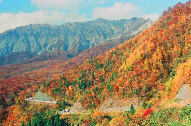 遠くから紅葉した山を見ている