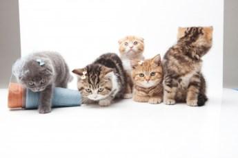 ヒカキンの猫の種類は何?まるおの名前の理由と由来もチェック!