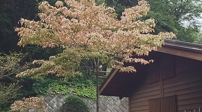 仙元山 今日はまだ曇っている