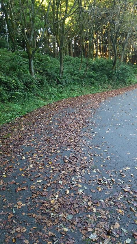仙元山の落ち葉