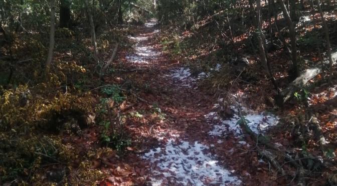 仙元山にも雪が降りました。
