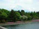 芝桜まつり3
