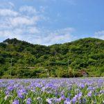 沖縄名所:大宜味村喜如嘉のオクラレルカ畑の場所わかる?