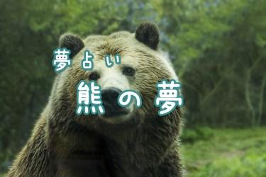 【夢占い】熊の夢16の意味 出てくる・襲われる・食べられるなど