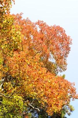 S #1 夏と秋