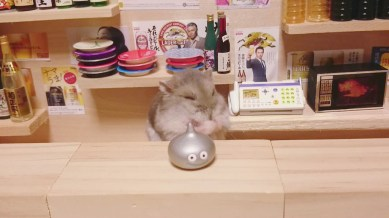 hamster-bartender-miniature-bar-kawanabesatou-10