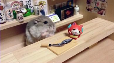 hamster-bartender-miniature-bar-kawanabesatou-19
