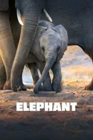 สารคดี Elephant (2020)
