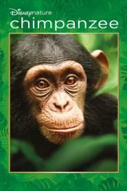 ชิมแปนซี ผจญภัยในป่ากว้าง Chimpanzee (2012)