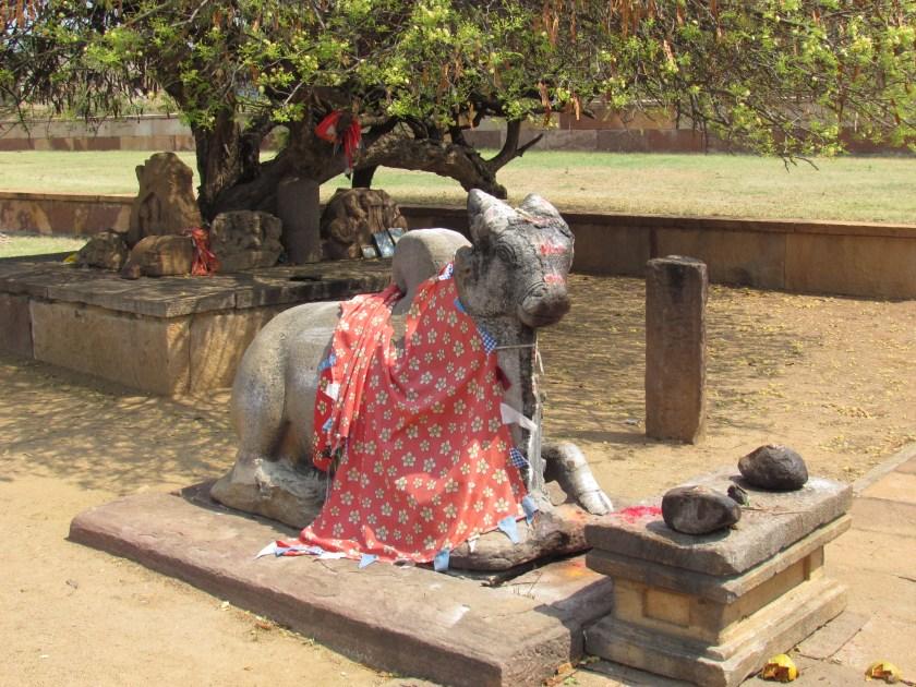 Nandi the bull