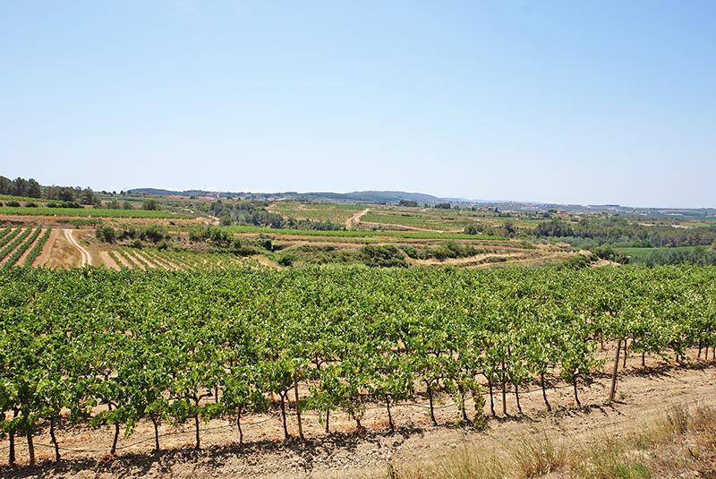 D.O. Catalunya Vinos