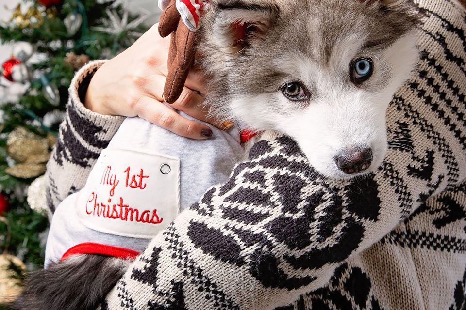 PetSmart 12 Days of Giveaways