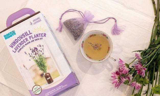 Free Windowsill Lavender Planter