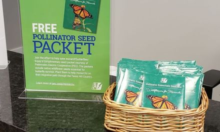 FREE Pollinator Seed Packets