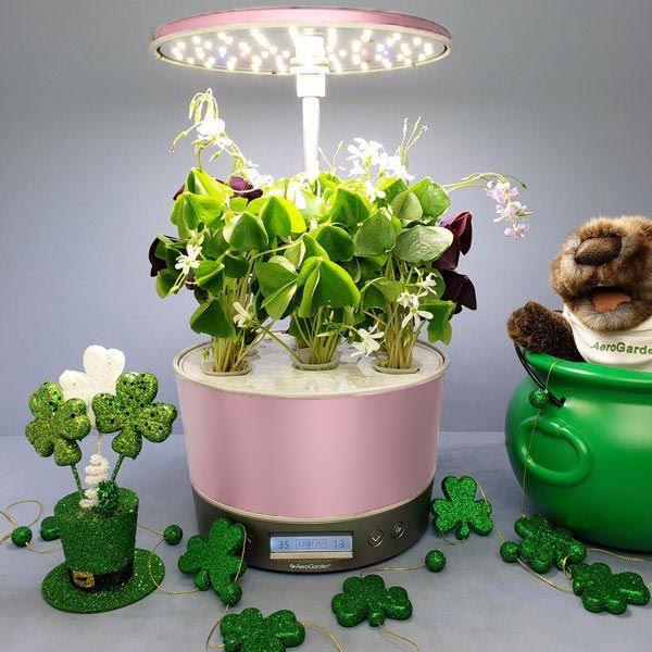 AeroGarden St. Patrick's Day Giveaway